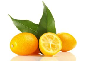 Kumquats are in season in the middle of winter to early spring.