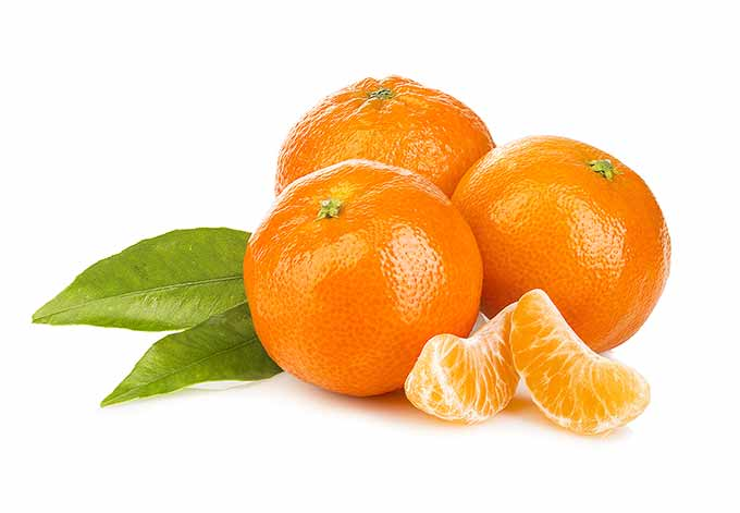 Mandarins are in season throughout winter and early spring.