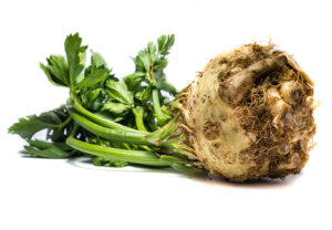 When is celery root in season? How to pick the best ones and store them.
