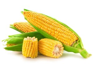When is corn in season