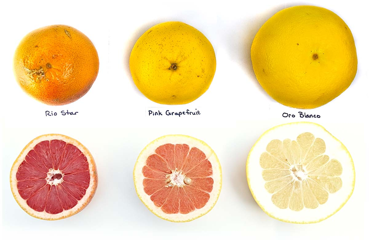 Types of grapefruit varieites: Ruby Rio Star, Pink, Oro Blanco
