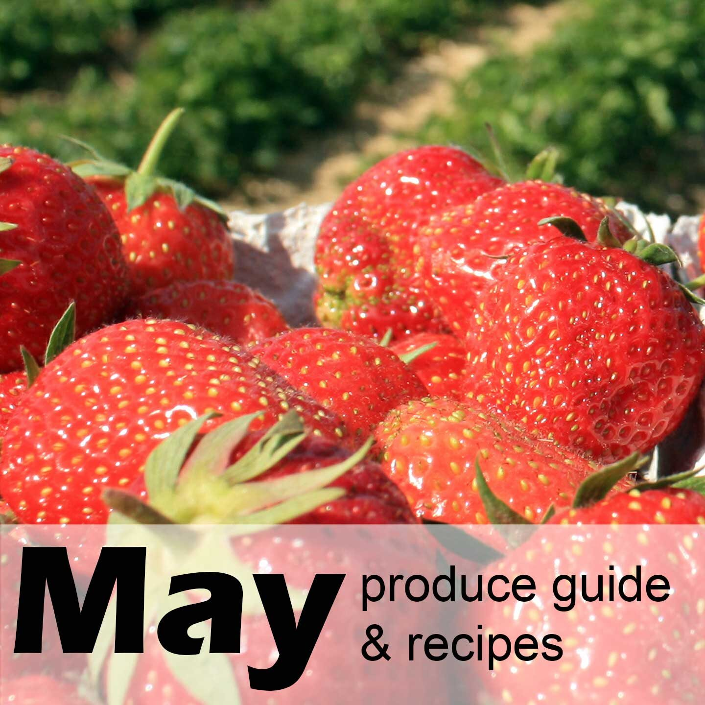 Strawberries in baskets on a farm, with text May produce guide & recipes