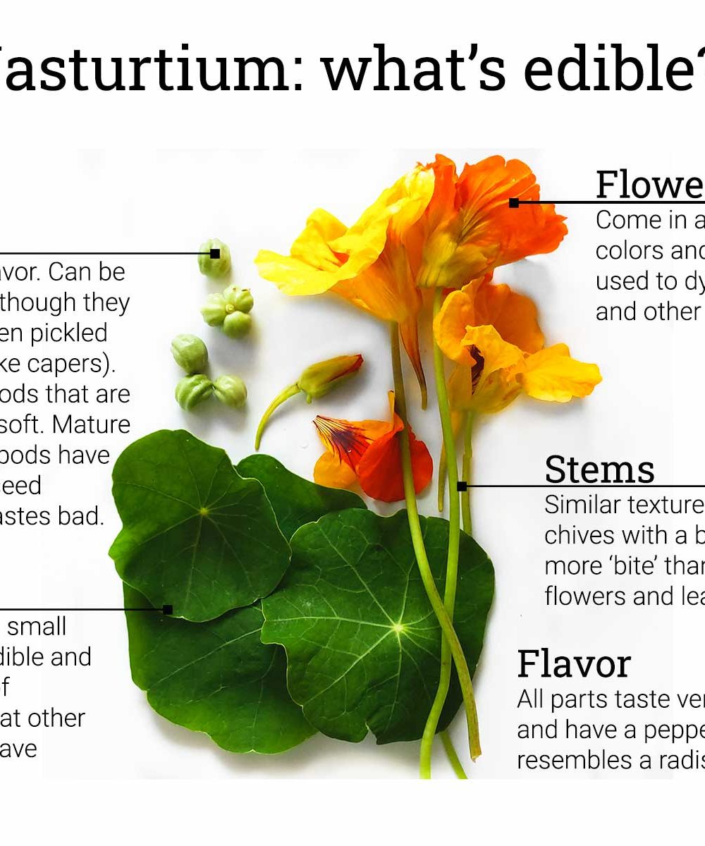 All nasturtium parts are shown with text indicating what's edible: green seeds, leaves, stems, and flowers.