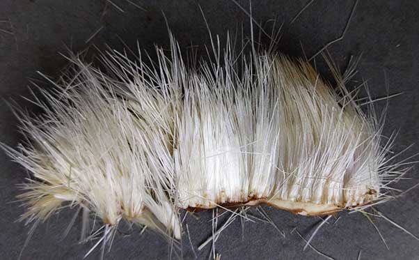 Closeup of the artichoke's choke