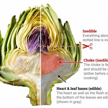 A diagram of an artichoke, cut in half, showing the heart and lower leaves as edible.