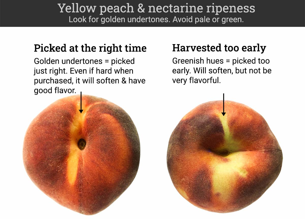 Ripe yellow nectarines and peaches will have a golden undertone. Unripe ones will be slightly green.