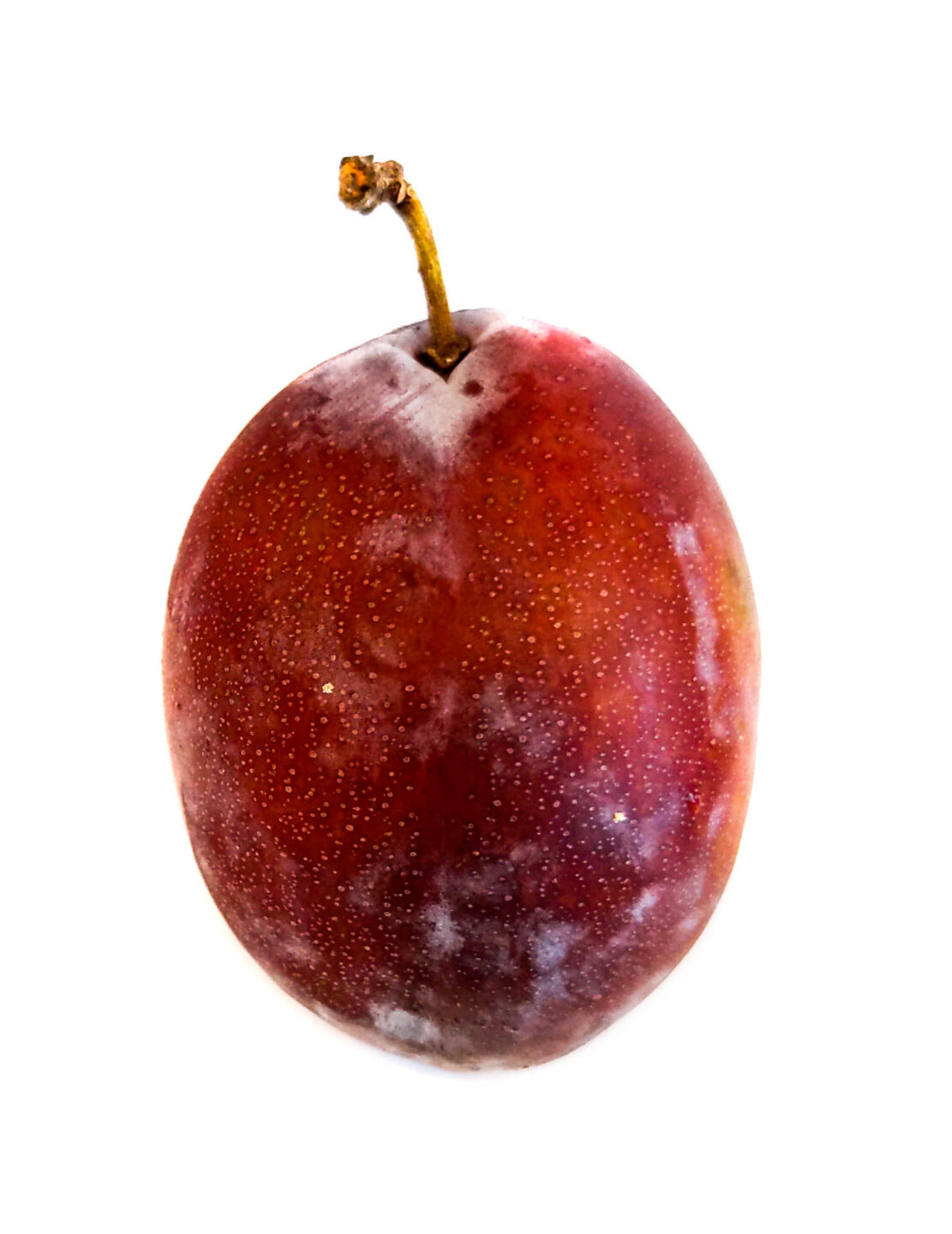 Prune type of plum: oval and often has white 'blooming' on the skin