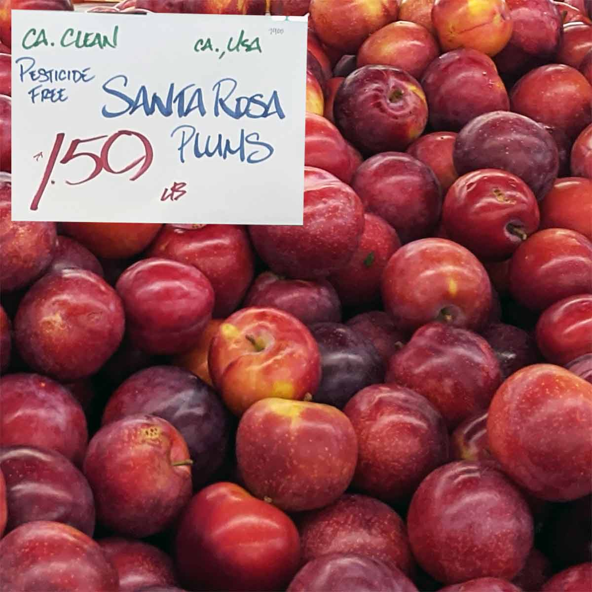 santa rosa plums - to be used in recipes