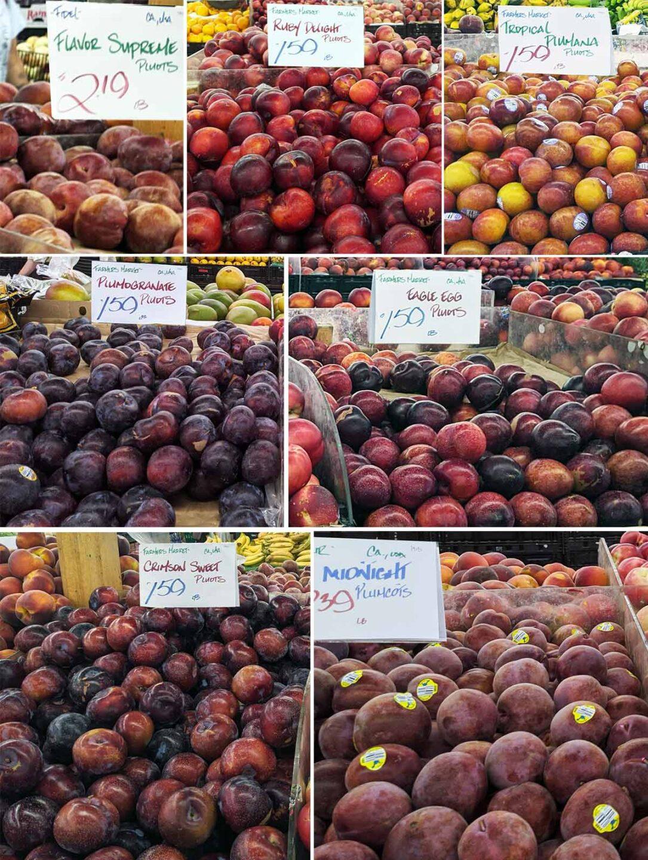 Pluot and plumcot varieties: flavor supreme, ruby delight, tropical plumana, plumogranate, eagle egg, crimson sweet, midnight