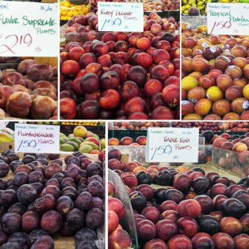 plumcots and pluots