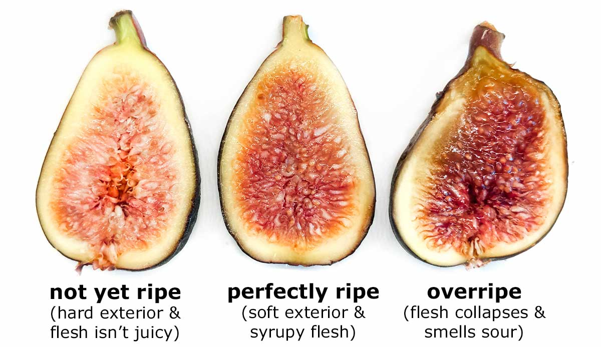 Fig ripeness chart: under-ripe, perfectly ripe, over-ripe