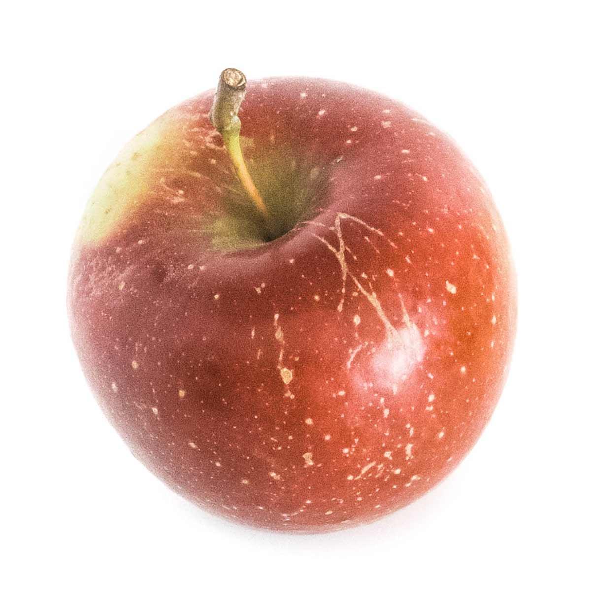 Rome beauty apple variety